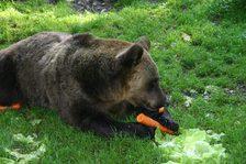 Natural Feeding Programme