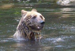 Het Berenbos beschermen