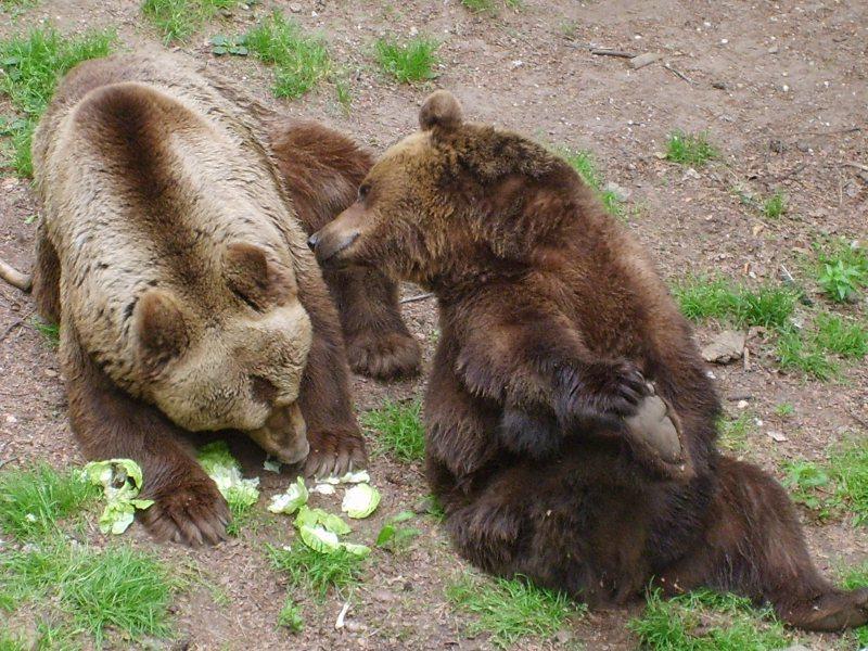 Beren als erfgenaam