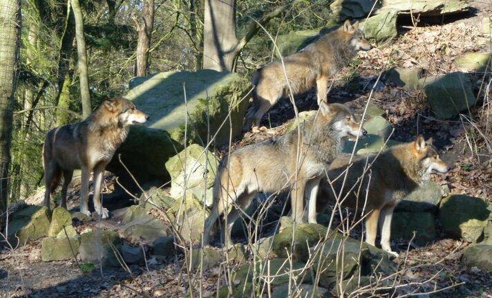 Adopteer een wolf