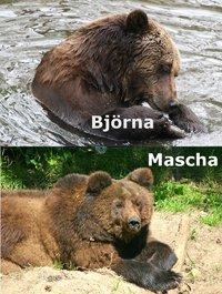 Adopties Mascha en Björna