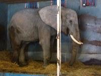 Geen wilde dieren meer in circussen
