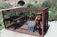 TV spot over beren in gevangenschap in Albanië
