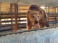 Beren uit Albanië gered