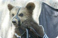 Persbericht Opvangcentrum voor wilde (circus)dieren in Rusland