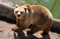 Speciaal geschenk voor beren in Helsinki Zoo