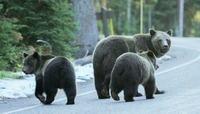 Beren en wegen in Canada