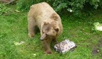Traktaties voor de beren