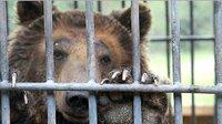 Petitie voor bruine beer Ekatarina