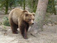 Het Berenbos neemt afscheid van beer Keta