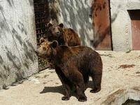 Persbericht transport Bulgaarse beren