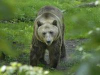 Persbericht overlijden beer Mackenzie