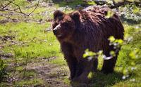 Bear Mascha passed away