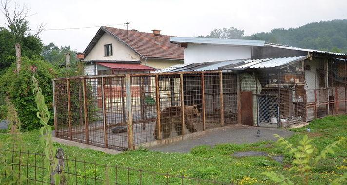 Hulp voor beren in Bosnië
