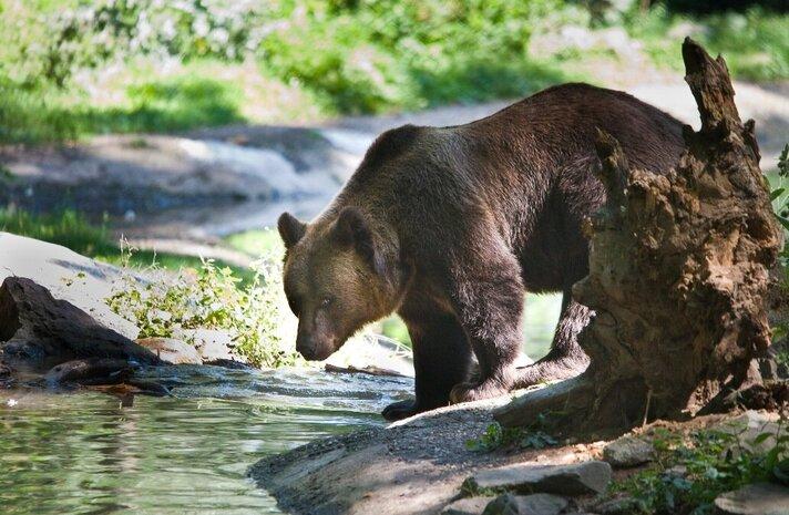 Berenbosbeer Tory overleden