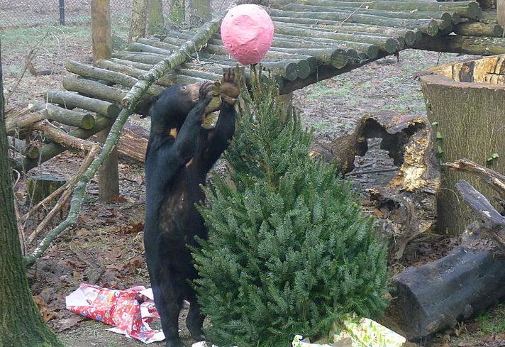 Kerst voor Maleise beren