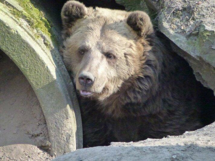 Bears in Mind beperkt bereikbaar