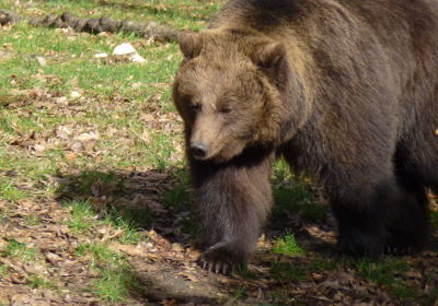 Steun de beren en word berenbeschermer