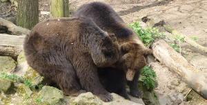Het Berenbos in Rhenen