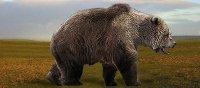 Holenbeer