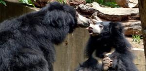 Bears in Mind deelt haar kennis