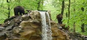 Bears near waterfall